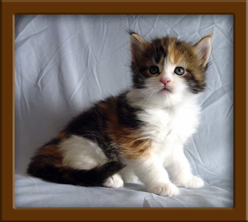 Great Names For Maine Coon Cats